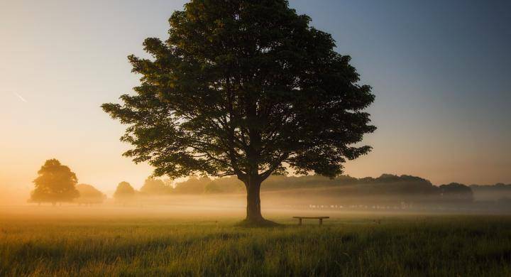 Spring 2019: Mindfulness Practices —  INST 2500 - 001