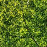 Mindfulness and Nature—KINE 1055—Fall 2021